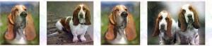 Basset Hound Dog Breed Design Version No2 Custom Printed Grosgrain Ribbon