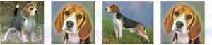 Beagle No2 Dog Breed Designer Custom Grosgrain Ribbon