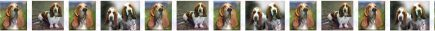 Basset Hound Dog Breed Design Version No2 Shown Repeated Custom Printed Grosgrain Ribbon