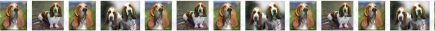 Basset Hound Dog Breed Design Version No2 Shown Repeated Custom Printed Grosgrain Ribbon