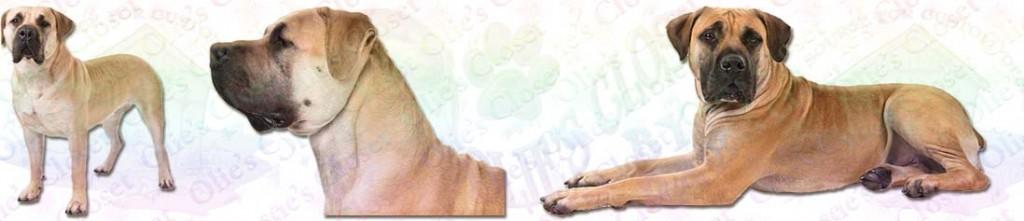 Boerboel Dog Breed Ribbon Design
