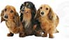 Long Haired Dachshund No2 Product Image No2