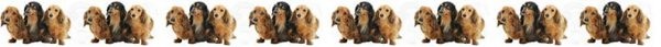 Long Haired Dachshund No2 Product Image No1